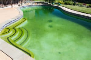 yellow pool algae